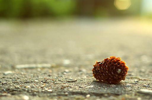 Nature, Outdoors, Cone, Pine, Summer