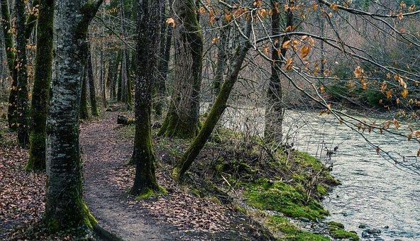 Nature, Wood, Tree, Landscape, Leaf, Season, Plant