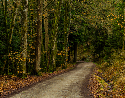 Road, Wood, Landscape, Nature, Forest Path, Idyll