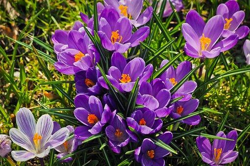 Nature, Plant, Flower, Garden, Flowers, Grass, Season