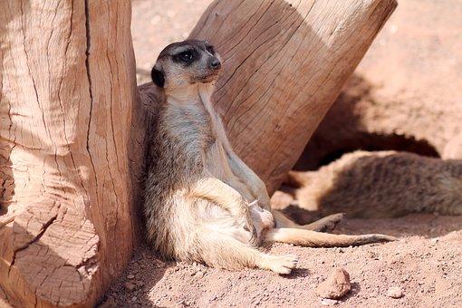 Mammals, Wild Animals, The Animal Kingdom, Cute