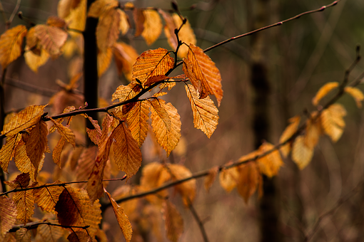 Leaf, Autumn, Tree, Nature, Plant, Orange, Of Course