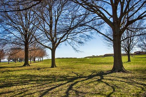 Tree, Landscape, Nature, Wood, Season, Fort Mchenry