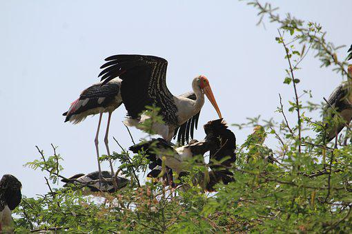 Stock, Bird, Wildlife, Nature, Animal, Stork, Wing