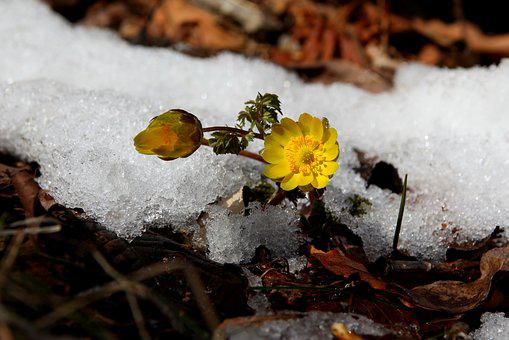Snow, Winter, Nature, Multiple Seconds, Wildflower