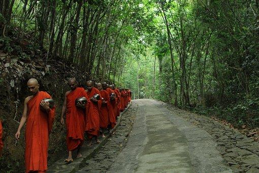 Wood, Tree, Nature, Outdoors, Monk, Buddha, Religion