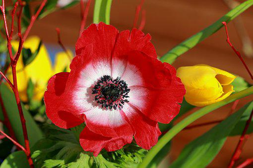 Still Life, Flower, Bouquet, Spring Bouquet, Yellow