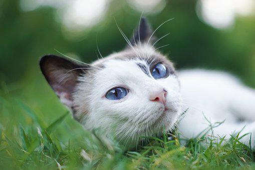 Cute, Animal, Nature, Little, Mammal, Cat, Pet, Grass