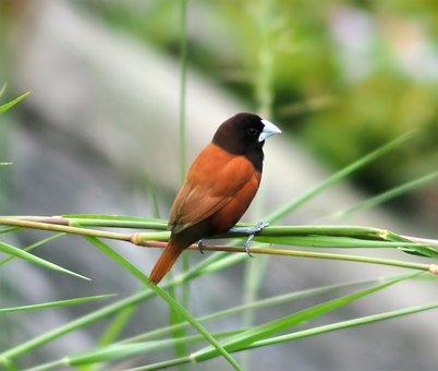Wildlife, Bird, Nature, Outdoors, Songbird, Animal