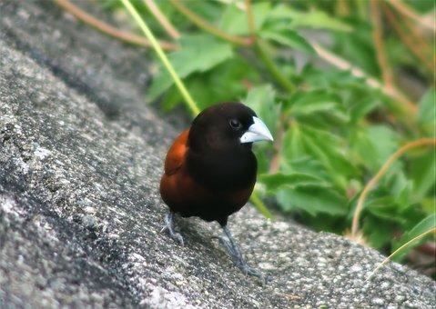 Wildlife, Bird, Animal, Nature, Outdoors, Little, Wild