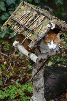 Cat, Pet, Mammal, Fauna, Birdhouse, Bird Feeder, Bird