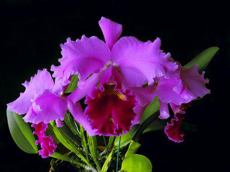 Flower, Flora, Nature, Floral, Orchid, Blossom