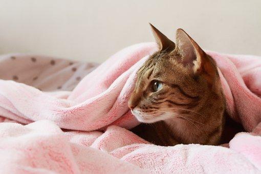 Cat, Lying, Dormant, Home, Pet, Pussy, Small, Cute