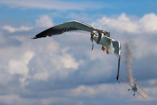 Seagull, Double Decker, Air Combat, Machine Gun, Bird