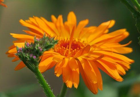Nature, Plant, Flower, Summer, Garden, Bouquet