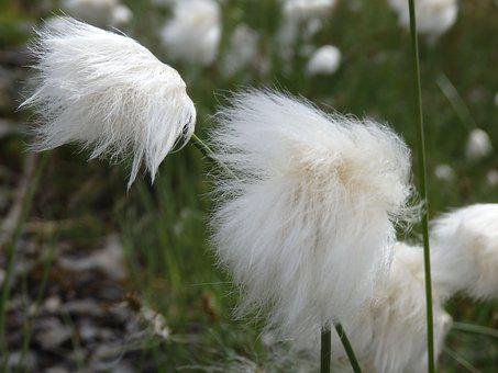 Fluffy, Nature, Feather, Grass