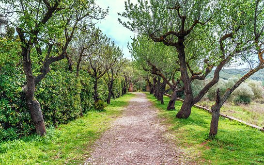Arboleda, Walk, Tree, Nature, Landscape, Wood, Lawn