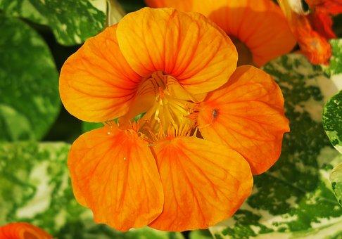 Nature, Flower, Garden, Plant, Color, Leaf, Light