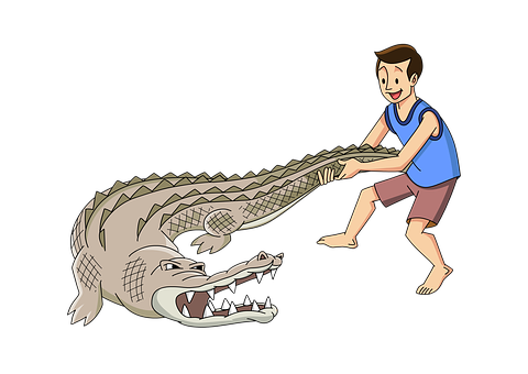 Man, Wrestle, Crocodile, Alligator, Strong, Male, Young