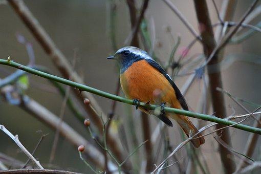 Bird, Wild Animals, Natural, Outdoors, A Key