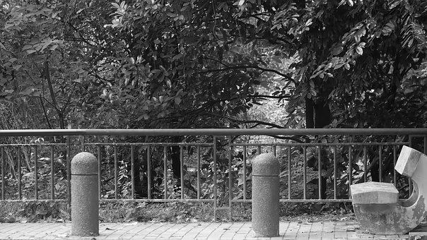 Monochrome, Tree, Black And White, Outdoors, Stone