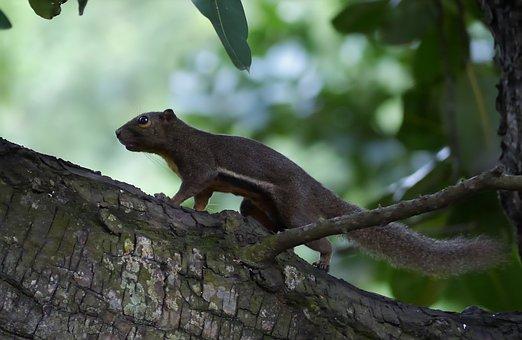 Tree, Outdoors, Wildlife, Wood, Nature, Animal, Cute