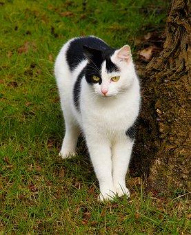 Cat, Cute, Animal, Mammal, Portrait, Shy, Female