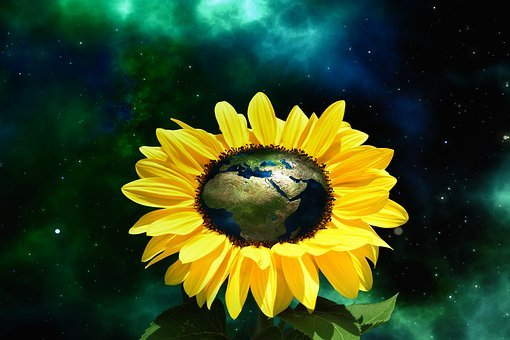 Europe, Africa, Asia, Sunflower, Globe, Space, Flower