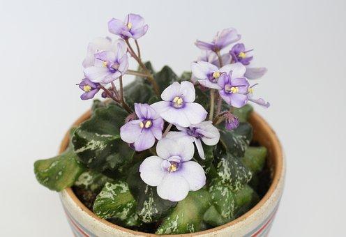 Flower, Violet, Indoor Plant, Flower Room, Sheet