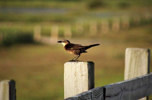 Bird, Outdoors, Wildlife, Nature, Animal, Grass, Water