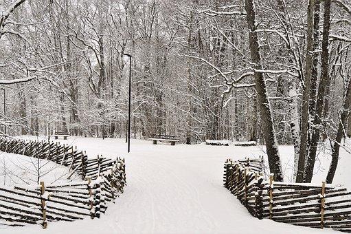 Winter, Snow, Tree, Wood, Cold, Apladalen, Värnamo