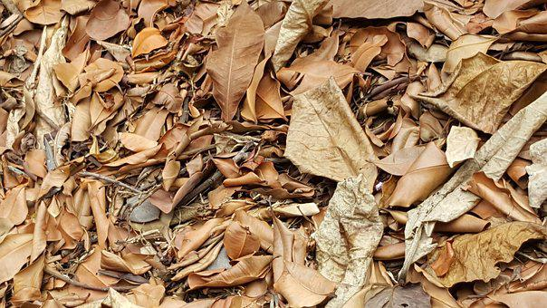Dry, Batch, Nature, Wood, Horizontal, Leaves, Floor