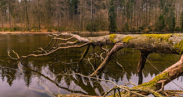 Nature, Wood, Tree, Waters, Landscape, Sky, Autumn