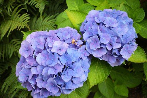 Flower, Zierpfanze