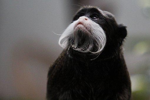 Animal, Mammal, Cute, Animal World, Portrait, Fur