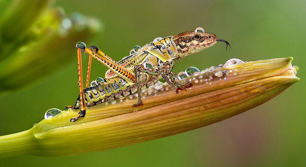 Insect, Animal World, Nature, Animal, Small, Hybrid