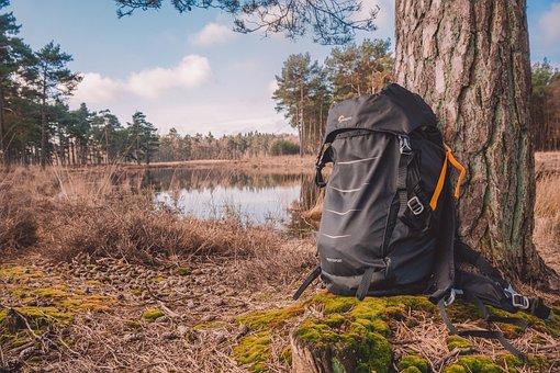 Nature, Tree, Outdoors, Fall, Wood, Bag, Backpack