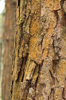 Tree, Nature, Bark, Desktop, Wood, Trunk, Old, Dry