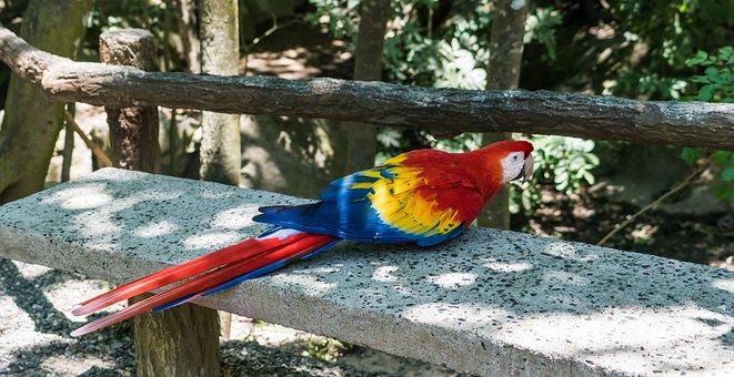 Macaw, Bird, Nature, Feather, Tropical, Beak, Exotic