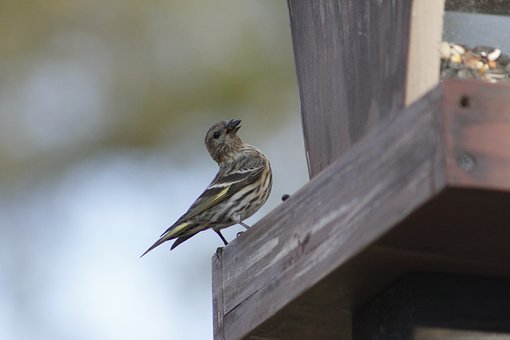 Outdoors, Nature, Bird, Wildlife, Feather, Wing, Animal