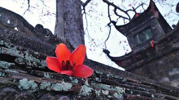 Red, Flower, Tree, Flora, Vietnam, Bombax, Branch