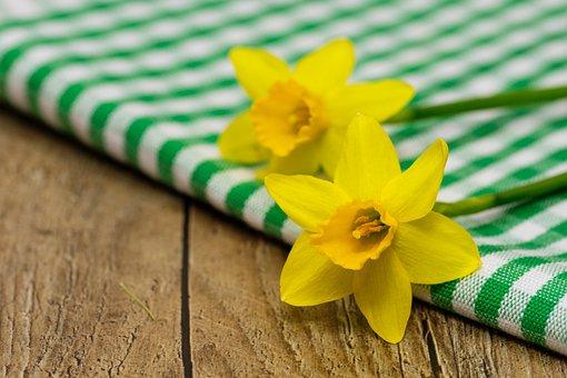 Daffodils, Osterglocken, Amaryllidoideae