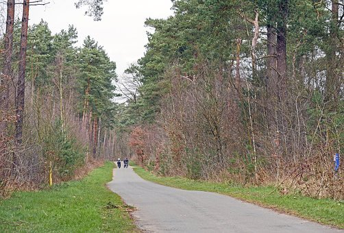 Bike Ride, Pine Forest, Early Spring, Forest Path