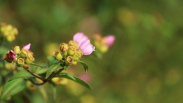 Nature, Flower, Summer, Flora, Leaf, Outdoors, Garden