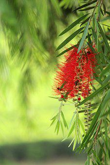 Nature, Tree, Flora, Branch, Leaf, Season, Summer
