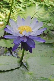 Flower, Plant, Nature, Leaf, Puddle, Garden, Botany