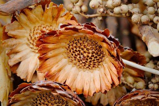 Nature, Food, Close, Plant, Color, Summer, Flower, Deco