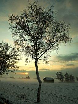 Tree, Nature, Dawn, Landscape, Wood, Fog, Season
