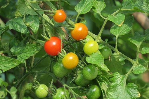 Food, Health, Vegetable, Leaf, Fruit, Close-up, Fresh
