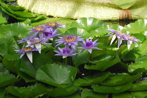 Flower, Plant, Nature, Leaf, Petal, Garden, Botany